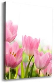 Foto obraz na plátne Ružové tulipány pl-oc-70x100-f-76412458