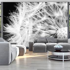 Fototapeta - Black and white dandelion 400x280