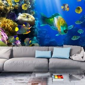 Fototapeta - Underwater paradise 400x309