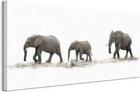 Obraz na plátne Púť slonov Moreno Mario 100x50cm WDC93166