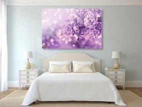 Obraz fialový kvet orgovánu