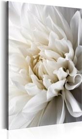 Obraz - White Dahlia 80x120