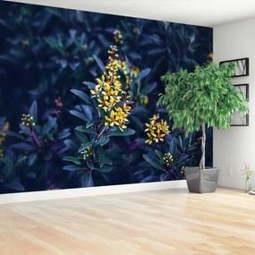 Fototapeta žlté kvety