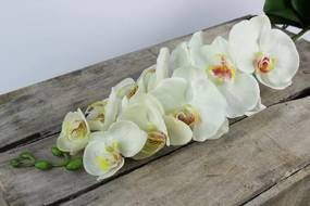 Biela umelá orchidea na stonke 80cm