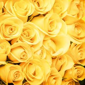 Dimex fototapeta Žlté ruže L-550 | 220 x 220 cm