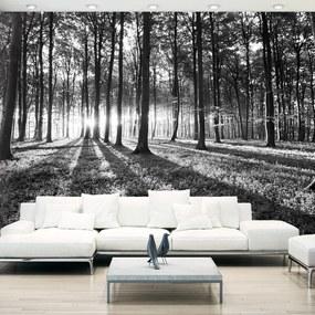 Fototapeta Bimago - Grey Wilderness + lepidlo zadarmo 400x280 cm