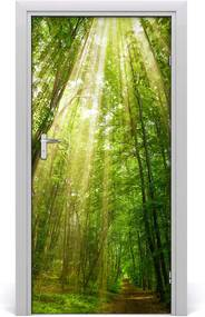 Fototapeta na dvere  chodník v lese