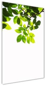 Foto obraz akryl do obývačky Zelené lístie pl-oa-70x140-f-178793479