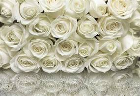 Fototapety, rozmer 368 x 254 cm, ruže biele, SUNNY DEKOR SD314
