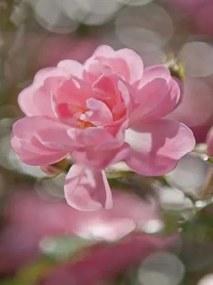 Fototapety, rozmer 184 x 254 cm, ružové okvetie, Komar 4-713