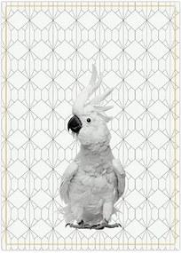 Bavlnená utierka – papagáj