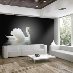 Fototapeta - swan (black and white) 200x154