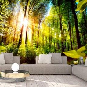 Fototapeta - Forest Hideout 200x140 + zadarmo lepidlo