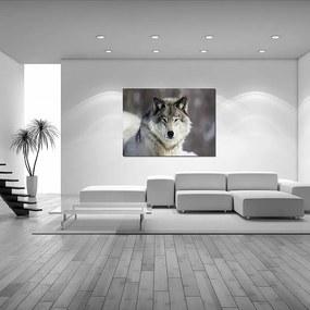 Styler Sklenený obraz - Wolf 120x80 cm