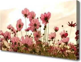 Obraz Canvas Poľné Kvety Lúka Príroda
