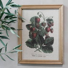 Chic Antique Botanický obraz v ráme Strawberry 43x33cm