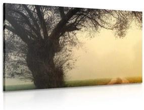 Obraz obrovský strom