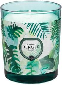 Maison Berger Paris Immersion sviečka Čerstvý eukalyptus, 240 g