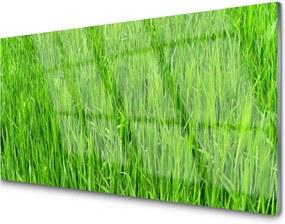 Obraz plexi Zelená Tráva Príroda Trávnik