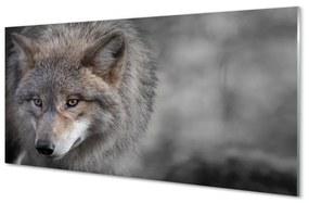 Nástenný panel vlk 100x50cm