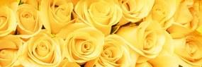 Dimex fototapeta Žlté ruže M-494 | 330 x 110 cm