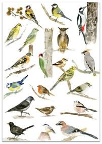 MANKAI Paper Plagát s vtáčikmi A3 Birds