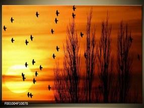 Obraz na plátne Vtáky, Štvorec 50x50cm 33.68 €
