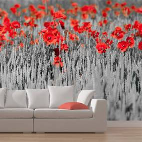 Fototapeta - Red poppies on black and white background 400x309