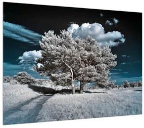 Obraz snehovo bieleho stromu (K010149K7050)