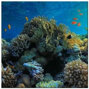 Tlačený obraz Krásny korálový útes 2161A_1AI